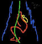 Gruppo Speleologico CAI Carrara